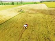 Chính sách tăng thu nhập cho nông dân trồng lúa An Giang