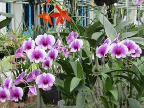 Đi Nhật về, 8x miệt vườn mang tiếng mê lan hơn…vợ