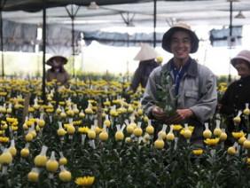 Liều đầu tư tiền triệu trồng hoa nhà kính ở vựa rau, thu gấp 3 lần