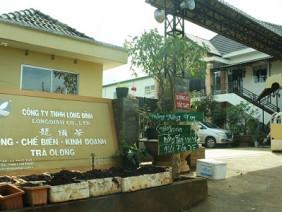 Nông dân lao đao bị doanh nghiệp có chữ Trung Quốc xù tiền mua chè