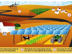 Công nghệ siêu mới: Trồng cây dưới... pin năng lượng mặt trời