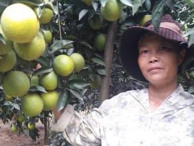 Làm giàu ở nông thôn: Bí quyết chăm cam sai như nho nhờ thuốc lào