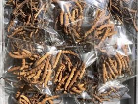 Chi 2,2 tỷ đồng mua 1 kg đông trùng hạ thảo Tây Tạng làm quà Tết