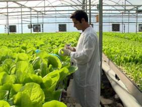 Vấn đề quan tâm: Sẽ có 2 chuẩn chứng nhận cho nông nghiệp hữu cơ