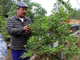 Nghề HOT: Trồng quất bonsai, bán giá cao hơn quất cảnh 10 lần