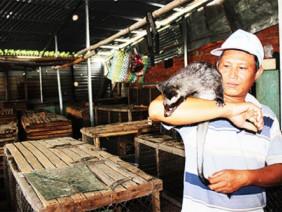 LẠ MÀ HAY: Cho chồn hương ăn chuối và cháo cá, lãi 400 triệu/năm