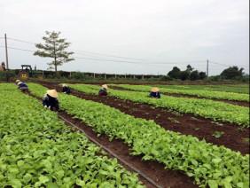 Xây dựng vùng nông nghiệp hữu cơ, đẩy lùi thực phẩm bẩn