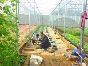 Lão nông ở tuổi 70 vẫn mê lên núi, bỏ tiền tỷ trồng rau trong nhà kính