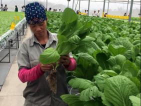 Nông nghiệp sạch phải gắn với phát triển phân bón hữu cơ