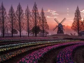 Tự hào nông dân Việt 2018: Chiêm ngưỡng trang trại triệu đô, ngắm hoa anh đào tại Nhật Bản