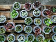 Hoa kiểng Trung Quốc tràn về vựa hoa lớn nhất Nam Bộ sát Tết