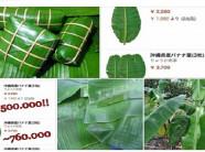 """Lá chuối ở Việt Nam vứt bỏ không tiếc, Nhật lại thành """"hàng đắt đỏ"""""""