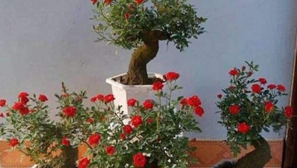 Độc, lạ hoa hồng giả cổ giá 1 triệu đồng/cây cháy hàng dịp Tết