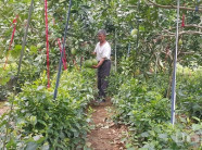 """Vườn """"trồng lung tung"""", tưởng """"bần cùng"""" hóa ra lại nhiều thu nhập"""