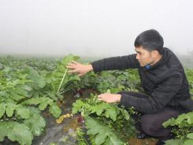 """Bí thư Đoàn trồng rau, củ quả Hàn Quốc cực """"khủng"""" trên """"đất lạnh"""""""