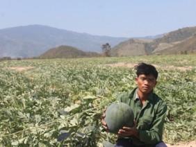 Ở nơi khô hạn nhất Việt Nam, nông dân vẫn