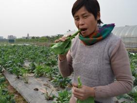 Ở nơi nông dân tự tin đứng giữa cánh đồng ăn rau không cần rửa