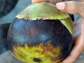 Ngọt ngào đặc sản thốt nốt - ăn một lần nhớ mãi ở vùng Bảy núi