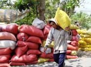 3 doanh nghiệp bị Trung Quốc dừng nhập gạo: Do gạo bị lẫn hạt cỏ?