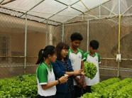 Thích thú mô hình học sinh vừa học vừa trồng rau, hoa công nghệ cao
