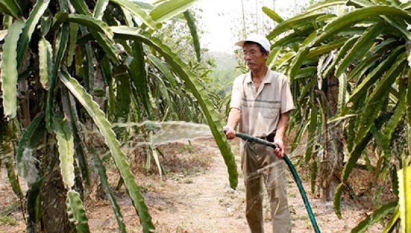 Lão nông biến sỏi đá thành vườn cây và đặc sản rượu thanh long sạch