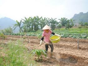 50 tỷ đồng đầu tư dự án nông nghiệp sinh thái độc đáo trên núi