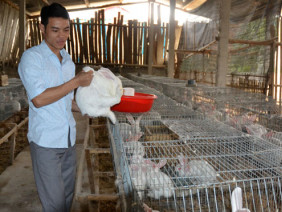 Kỹ thuật chăn nuôi thỏ sinh sản làm giàu cùng nhà nông