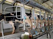 Mô hình chăn nuôi công nghệ cao là gì? Ứng dụng như thế nào?