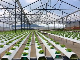 Nông nghiệp ứng dụng công nghệ cao là gì?