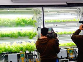 Nông nghiệp công nghệ cao ở Nhật Bản – Những Bước Đột Phá