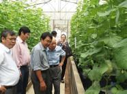 2018 - Mô hình nông nghiệp công nghệ cao Việt Nam nào tiềm năng?