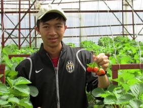 Kĩ sư trẻ lập vườn dâu tây ngoại tưới phân từ vỏ trứng gà, sữa tươi