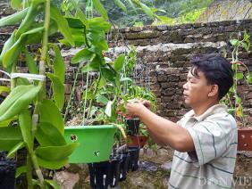 Làm giàu khác người: Cả làng trồng na, 1 mình trồng hoa ra trăm triệu