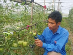 Kỹ sư 8X bỏ về quê trồng rau an toàn chỉ lo bị
