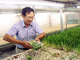 Mô hình trồng rau mầm trên san hô, thừa rau ăn, còn dư để bán
