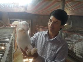 Nuôi cả ngàn thỏ trắng bán cho Nhật, lãi 40 triệu/tháng