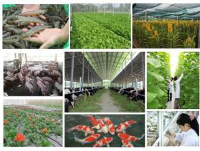 """Ngày 10.11: Hội nghị sơ kết 5 năm """"Đề án tái cơ cấu nông nghiệp"""""""