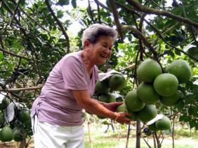 """Bỏ lúa trồng cây ăn trái, """"một bước lên tiên"""" bỏ túi cả tỷ đồng"""