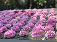 Trà hoa hồng cả bông 10 triệu/kg, bà chủ bỏ 2 tỷ không dám uống nhiều