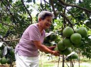 Bỏ lúa trồng cây ăn trái,