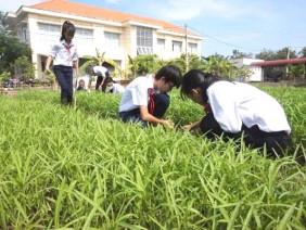 """Mướt mắt với """"vườn rau 4.0"""" của học trò Cần Đước"""