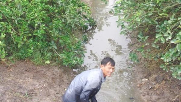 Bão số 9 quét qua, nông dân nháo nhào giải cứu vườn chanh tiền tỷ