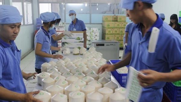 """Khởi công nhà máy dừa tươi """"khủng"""" 200 tỷ, công suất 25 tấn trái"""