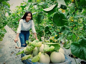 An Giang: Nữ kỹ sư công nghệ làm vườn dưa lưới khiến ai cũng mê
