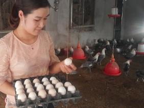 Chuyện lạ: Hot girl báo chí bỏ phố về quê nuôi lợn, thả gà làm giàu