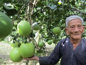 Lão nông U90 trở thành tỷ phú từ giống bưởi có cái tên mỹ miều