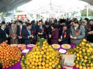 Hòa Bình: Thủ phủ cam Cao Phong tưng bừng mở hội cây có múi