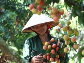 Ngành trồng trọt hướng đến mục tiêu 21 tỷ USD