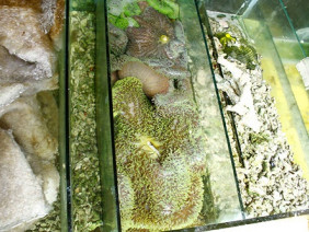 Làm giàu khác người: Phất lên nhờ nuôi cá cảnh nước mặn