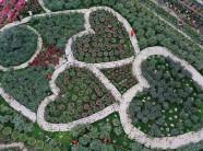 Lạc lối trong vườn hoa hồng trái tim tuyệt đẹp thu lãi tiền tỷ/năm